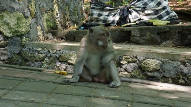 Indonesia - Bali - 18th ~ 20th March 2015 112