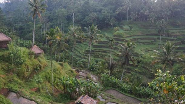 Indonesia - Bali - 18th ~ 20th March 2015 347